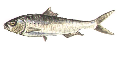 la foto de carné (o pescao)